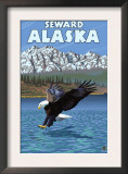 Bald Eagle Diving, Seward, Alaska Prints
