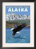 Bald Eagle Diving, Denali National Park, Alaska Posters