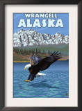 Bald Eagle Diving, Wrangell, Alaska Prints