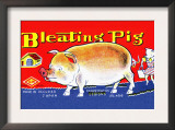 Bleating Pig Prints