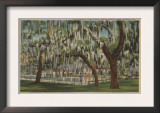 Lake Wales, FL - Outdoor View of Shuffleboard Court Prints