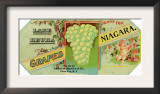 Penn Yan, New York - Lake Keuka Niagara Grapes Label, Laureled Child in Grapes Prints
