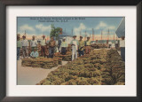 Tarpon Springs, FL - Scene of Sponge Exchange Prints