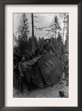 Lumberjacks standing around 7 ft. Fir Tree Photograph - Cascades, WA Print