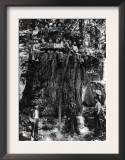 Lumberjacks prepairing Fir Tree for St. Louis World's Fair Photograph - Washington State Prints
