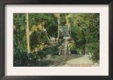 Alum Rock Park Picnic Grounds Vista View - San Jose, CA Posters