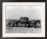 Sedan Chair Carried by Mules in China Photograph - China Print