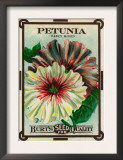 Petunia Seed Packet Posters