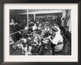 Women Working in a Teddy Bear Factory Photograph Prints