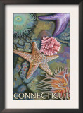 Connecticut - Tidepool Scene Prints