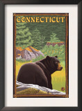Connecticut - Black Bear in Forest Prints