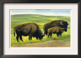 South Dakota, View of Buffalo, Monarchs of the Plains Print