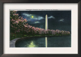 Washington DC, View of the Washington Monument with Cherry Trees at Night Posters