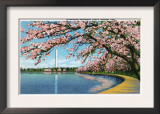 Washington DC, View of the Washington Monument with Blossoming Cherry Trees Poster