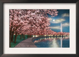 Washington DC, Potomac Park and Blossoming Cherry Trees Scene at Night Prints