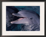 Bottlenose Dolphin (Tursiops Truncatus) Red Sea, Egypt Prints by Jeff Rotman