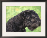 Russian Black Terrier Face Profile Prints by Adriano Bacchella