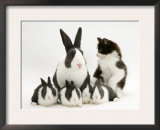 Blue Dutch Rabbit and Four 3-Week Babies and Black-And-White Kitten Print by Jane Burton