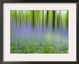 Bluebells in Beech Wood Abstract, Scotland, UK Prints by Pete Cairns