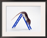 Domestic Rats at Play Prints by  Steimer