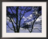 Trees in Kwazulu Natal, South Africa Art by Ryan Ross