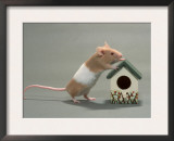Domestic Mouse Art by De Meester