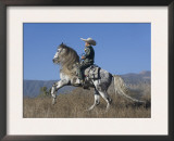 Horseman in Traditional Dress Riding Grey Andalusian Stallion, Ojai, California, USA Poster by Carol Walker