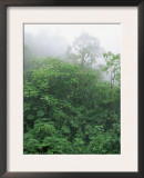 Tropical Rainforest Canopy in Mist, Braulio Carrillo National Park, Costa Rica Posters by Juan Manuel Borrero