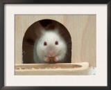 White Mouse in Hutch Posters by Petra Wegner