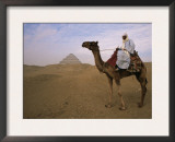 Bedouin Camel Rider in Front of Pyramid of Djoser, Egypt, North Africa Posters by Staffan Widstrand