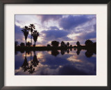 Palm Trees Silhouetted by Water at Sunset, Texas, USA Posters by Rolf Nussbaumer