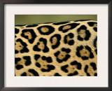 Jaguar, Close-Up of Fur Pattern, Pantanal, Brazil Posters by Staffan Widstrand