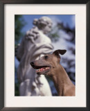 Fawn Whippet in Front of Statue Posters by Adriano Bacchella