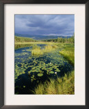 Loch and Pine Forest in Stormy Light, Strathspey, Highlands, Scotland, UK Prints by Pete Cairns
