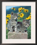 Domestic Cat, Two Kittens (Felis Catus) Prints by  Reinhard