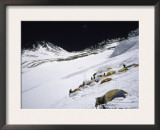 High Camp, Nepal Posters by Michael Brown