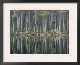 Pine Forest Reflections on Flat Calm Lochan, Cairngorms National Park, Scotland Prints by Pete Cairns