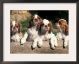 Four King Charles Cavalier Spaniel Puppies with Log Prints by Adriano Bacchella