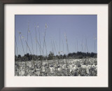 Snowy Blades of Grass in the Sun, Boulder Prints by Dörte Pietron