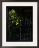 Dripping Water at Grotto Falls, Montana Prints by Ryan Ross