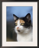 Domestic Cat Portrait, Europe Prints by  Reinhard