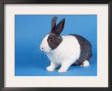 Dutch Rabbit Prints by Petra Wegner