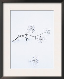 Angelica Stems, in Snow, Norway Prints by Niall Benvie