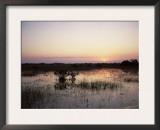 Red Mangrove Trees (Rhizophora Mangle) at Sunset, Everglades National Park, Florida Prints by Jurgen Freund