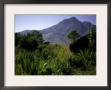Hikers Walk Through Plants with Mountain in Background, Madagascar Prints by Michael Brown