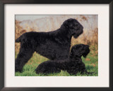 Domestic Dogs, Russian Black Terrier with Pup Prints by Adriano Bacchella