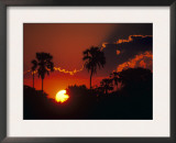 Palm Trees Silhouetted at Sunset, Okavango Delta, Botswana Prints by Pete Oxford