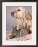 Golden Retriever, and Young Domestic Rabbits Prints by De Meester