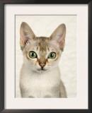 Head Portrait of Singapura Cat Prints by Petra Wegner