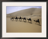 Camels in Caravan Walking in Desert, Morocco Prints by Michael Brown